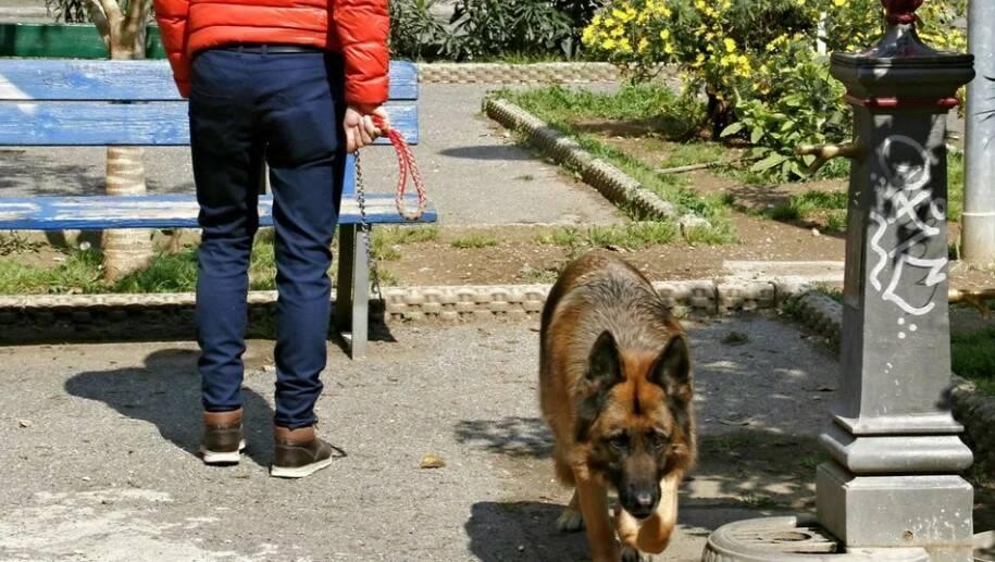 cani senza guinzaglio