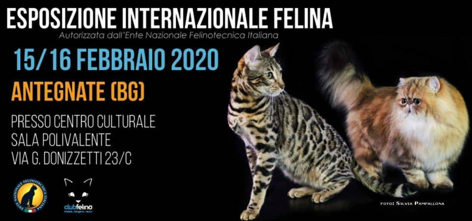 Expo internazionale felina