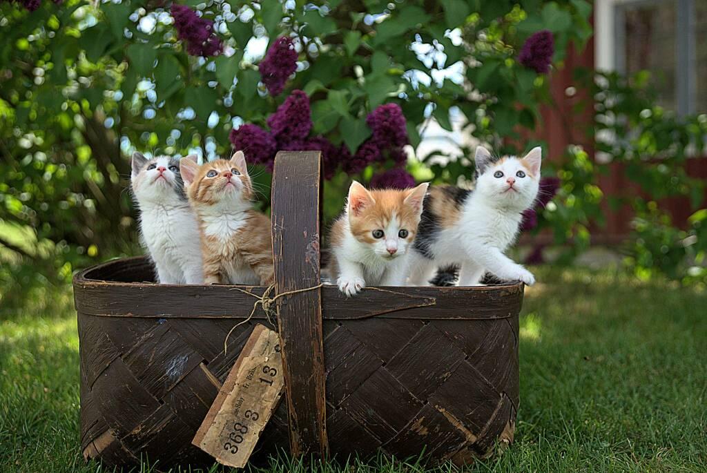 gatti (foto Jari Hytonen da Unsplash)