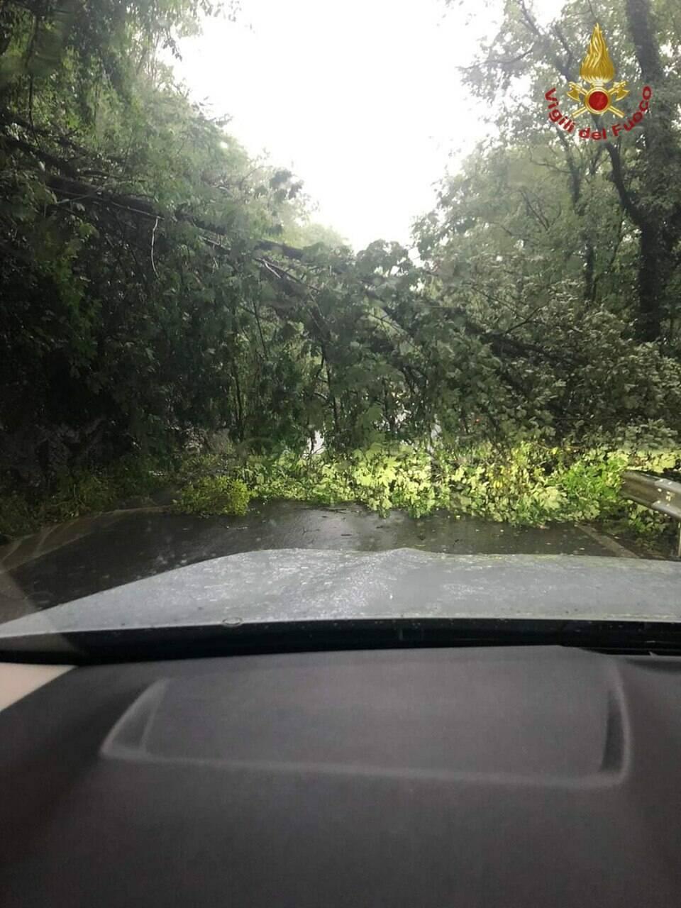 albero caduto nembro