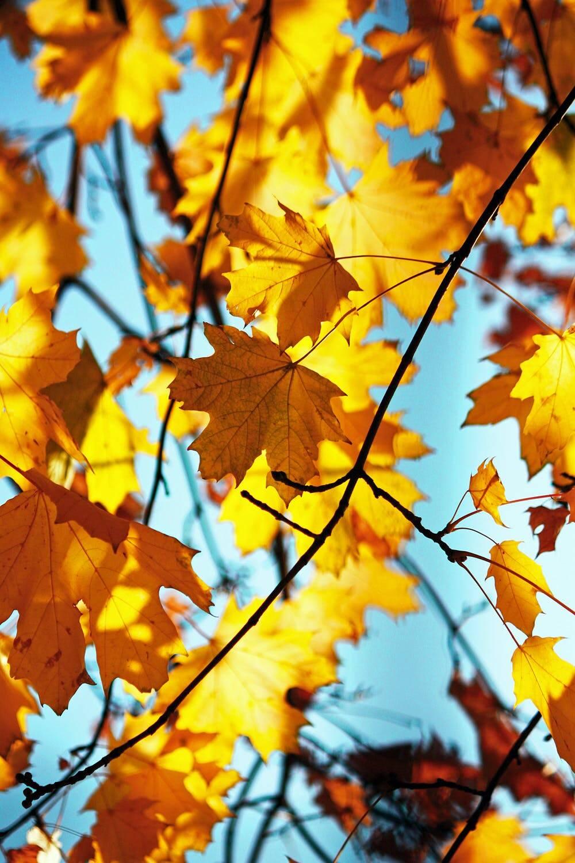autunno sole (foto Alex Rusin da Pexels)