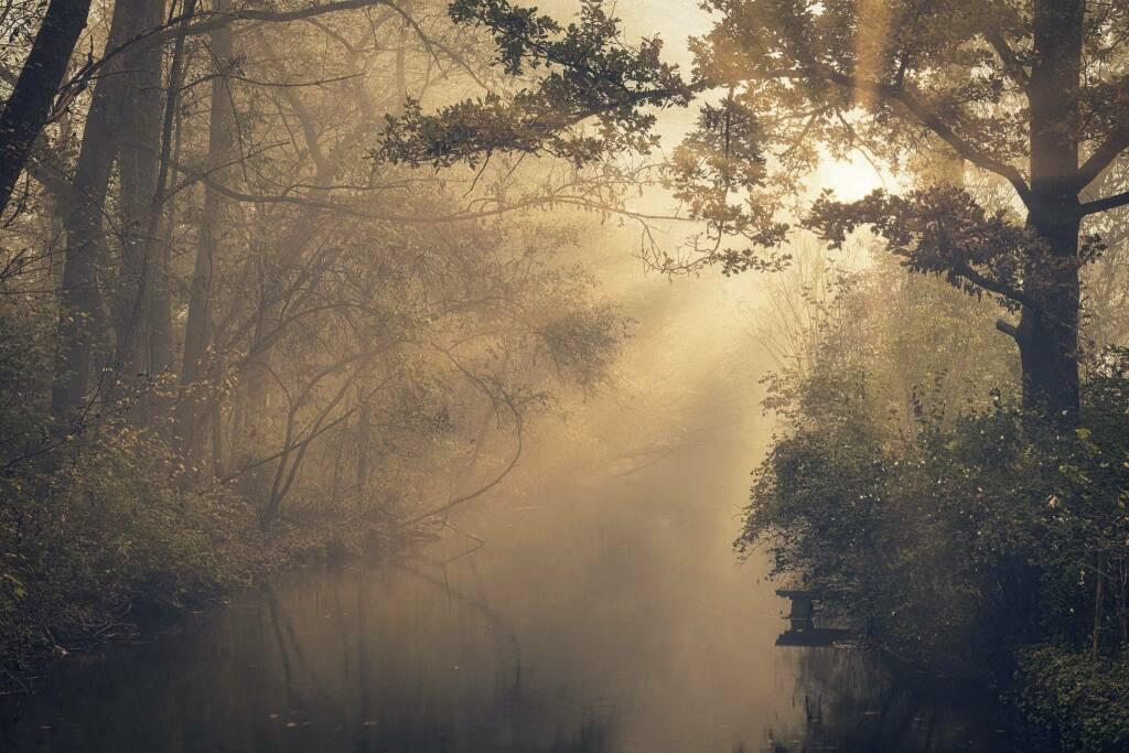 foschia nebbia autunno (Foto Johannes Plenio da Pexels)