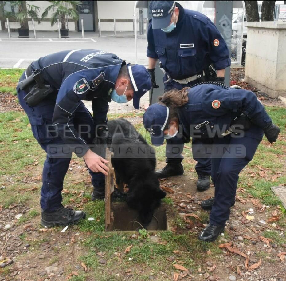 tenai cane polizia locale bg