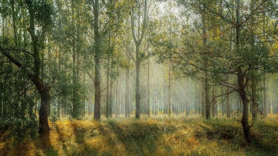 forest bosco foto da Pixabay