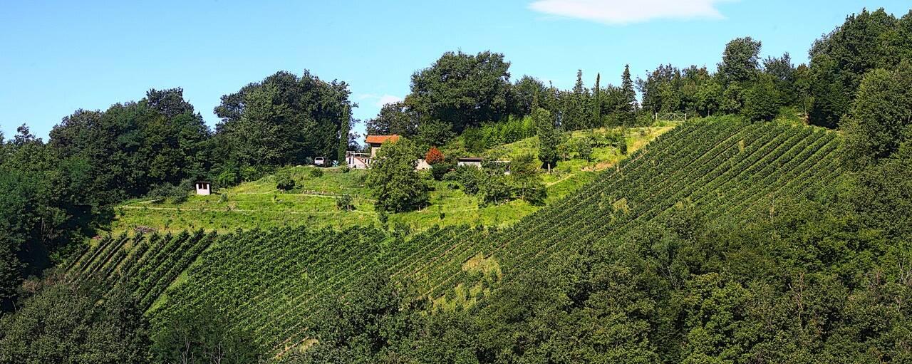 Azienda Agricola Le Driadi Palazzago