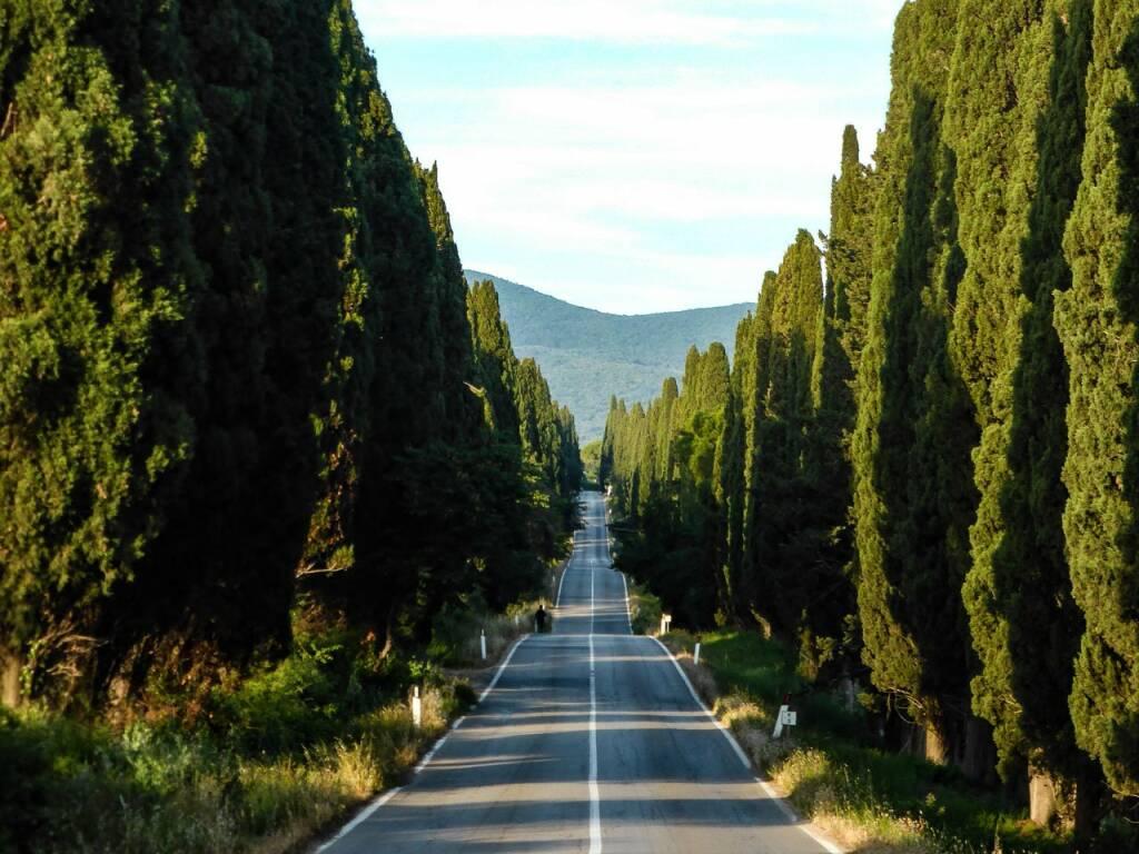 Il vino Sassicaia e la DOC Bolgheri: una storia lunga e affascinante