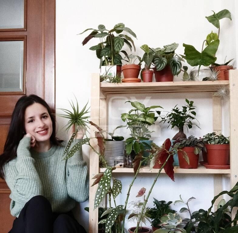 lisa piante