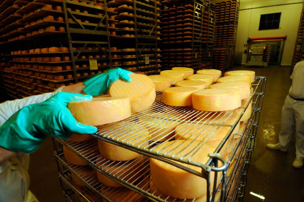 settore caseario - formaggi