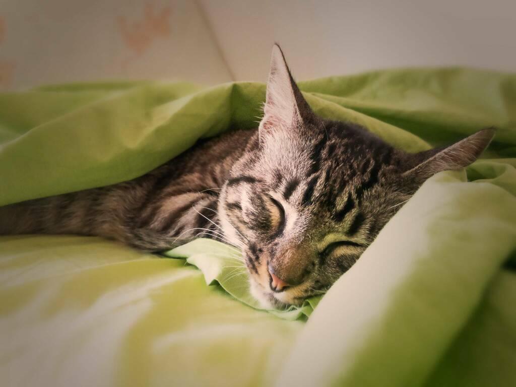 gatto (foto Gianandrea Villa da Unsplash)