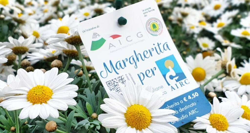 Un fiore per la ricerca: torna la Margherita per l'Airc