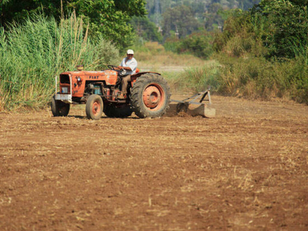 contadino (Public Domain Picture)