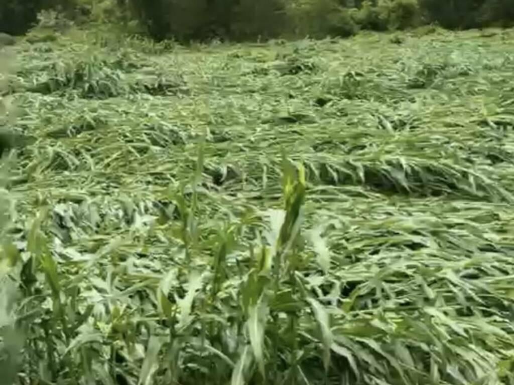 danni agricoltura grandine