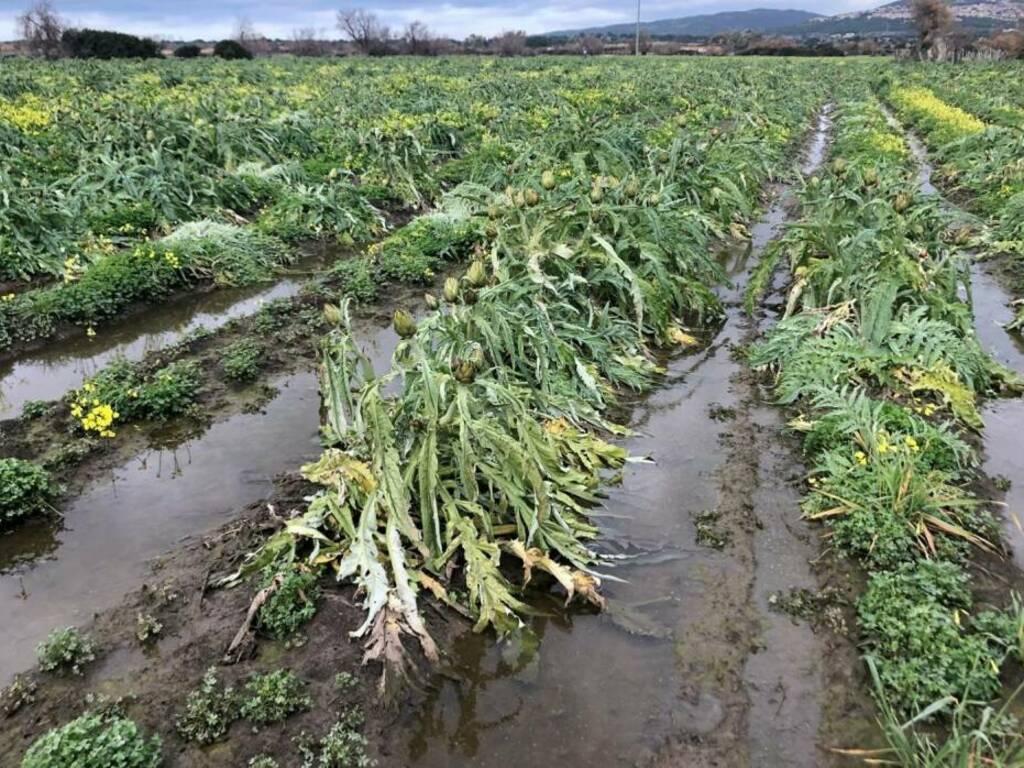 Maltempo danni agricoltura