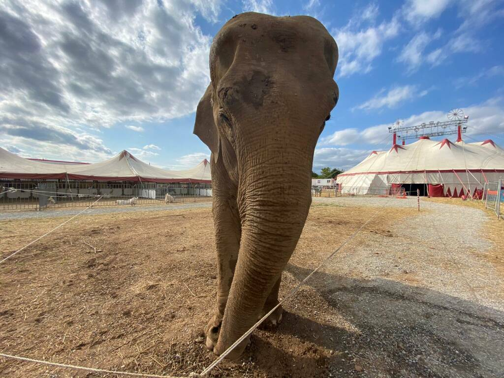 andra elefantessa