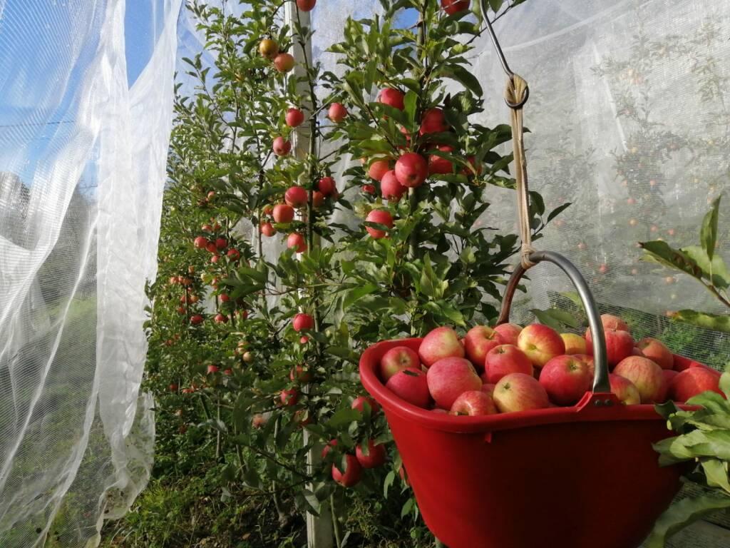 Auto raccolta mele in Valle Imagna al Giardino della Frutta